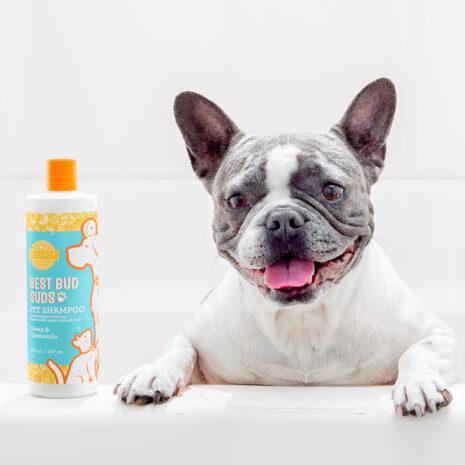 Scentsy Pets Shampoo